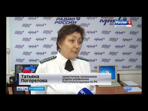 На территории Республики Калмыкия Управление Россельхознадзора проводит мониторинг продовольственного картофеля
