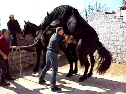 Sesso con un cavallo per guardare video online gratis
