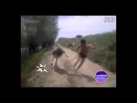 Thanh niên Tàu khựa oánh nhau với cả ngựa !