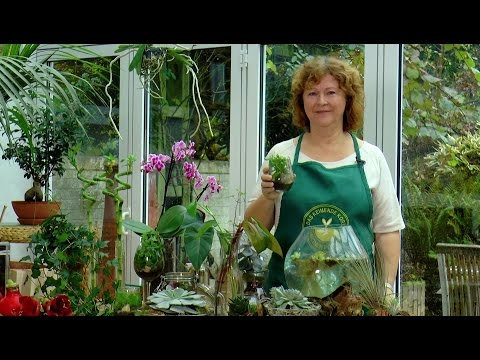 Zimmerpflanzen ohne Erde - Der Grüne Tipp