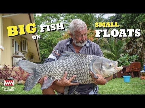 John Wilson - Siamesisk karpe i Thailand