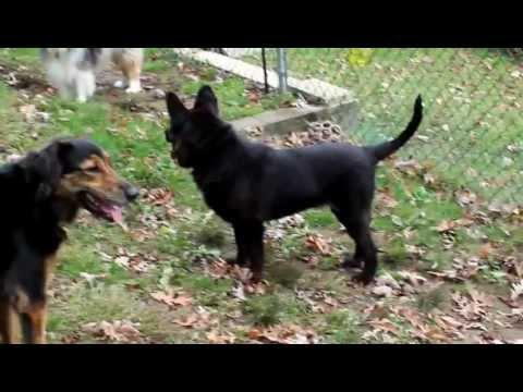 Berkeley - My 13th Fosterdog