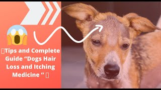 "🔥Tips and Complete Guide ""Dogs Hair Loss and Itching Medicine "" 👍"