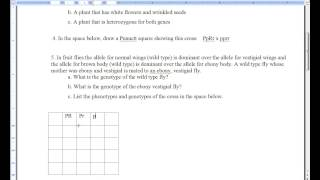 Dihybrid Cross Practice Worksheet