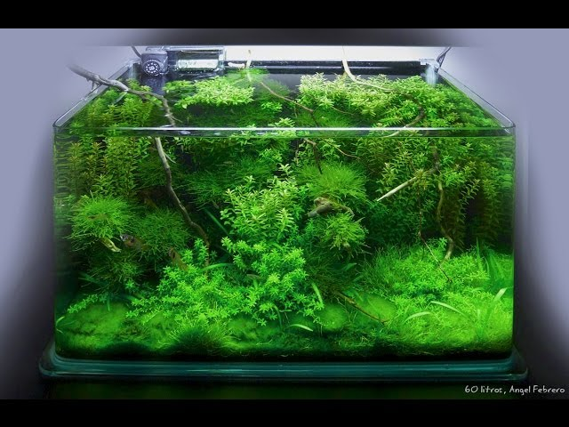 Biobricolaje 1º Montaje de un acuario de agua dulce + entrevista en plató del comienzo de la serie