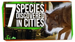 7 New Species Discovered in Cities