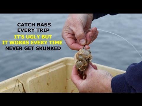 HOW TO CATCH STRIPED BASS-THE EASIEST WAY NEVER BEEN SKUNKED !!