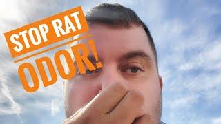 Rat Breeding & Smell Removal