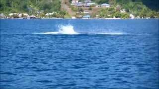preview picture of video 'Baleine Raiatea Polynésie'