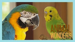 How to Introduce Two Parrots