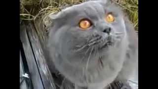 Пьяный кот разговаривает матом