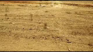 2.5 Acre Farm Land for Sale in Shadnagar, Hyderabad