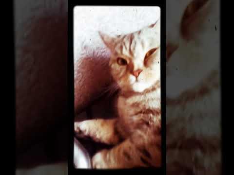 Колыбельная для кота или кошки