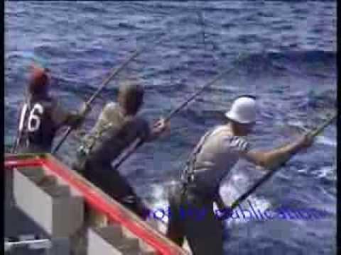Ostrica di lago che pesca azzurro