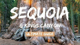 Sequoia & Kings Canyon National Parks: World's Largest Trees (2020) 4K