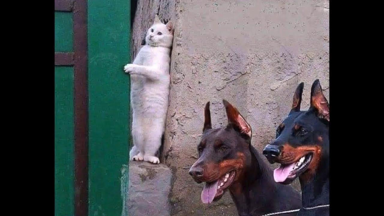 가장웃긴  고양이 영화   ㅋㅋㅋ