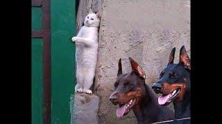 고양이 vs 개   싸움의 승자는  🐶😸가장 웃긴 고양이 영화 ㅋㅋㅋ