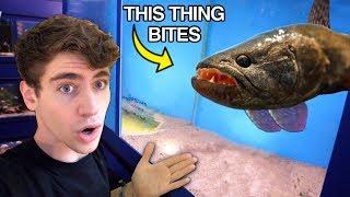 *SCARIEST* Fish EVER... the ULTIMATE PREDATOR?!