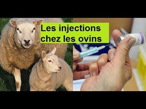 La varicosité et la phlébite à