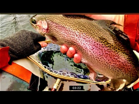 GIANT Stillwater Trout on the Fly