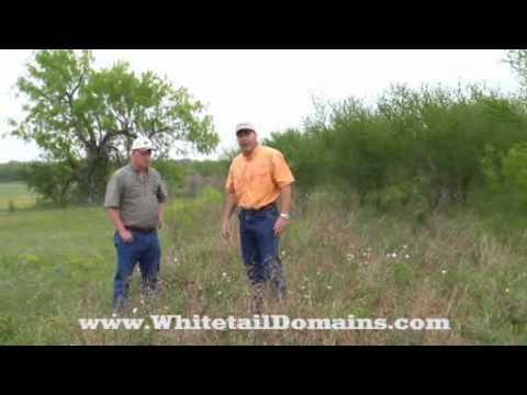 Bee Wild Bundleflower, Part 1