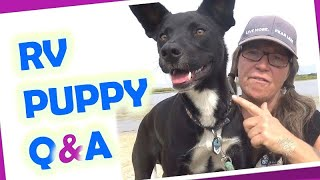 RV Living with a Dog//Rattlesnakes, Food, Training, Vet Care, Car Sickness