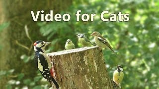 Videos for Cats to Watch : Woodpecker Surprise - 8 HOURS ✔️
