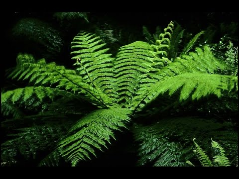 Tipos de Helechos y cuidados en la jardinería - TvAgro por Juan Gonzalo Angel
