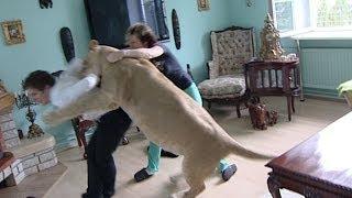 Leão ataca homem em casa