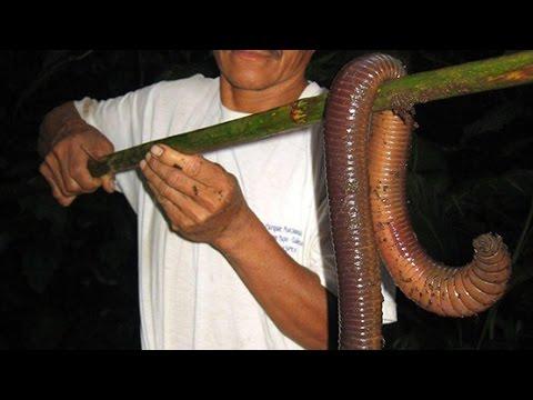 Activation ng parasites mula sa buwan