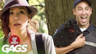 bromas trampas exasperantes con un perro
