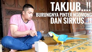 Download Video Takjub...!!!! burung nya pinter ngomong dan sirkus...!! MP3 3GP MP4