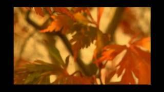Julia Fischer - Vivaldi - As Quatro Estações - Outono - Mov 2°Adagio (HD)
