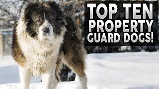 Top 10 Dog Breeds For HOME PROTECTION!