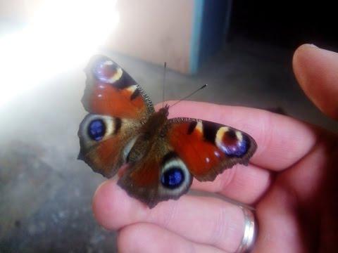 Бабочка в последний день зимы (28 февраля)