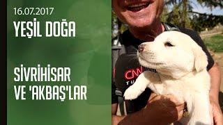 Sivrihisar Ve Akbaş çoban Köpekleri - Yeşil Doğa 16.07.2017 Pazar