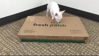 Fresh Patch vs. Potty Pads