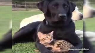 СМЕШНОЕ ВИДЕО ПРИКОЛЫ 2018  Подборка про животных #28