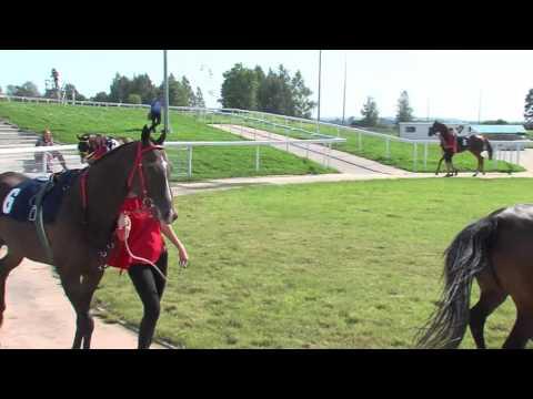 žaidimų žirgų lenktynių prekybos strategijose
