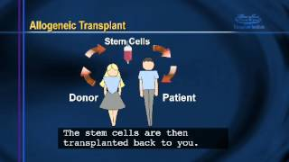 Bone Marrow - Transplant