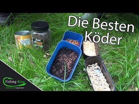 Die besten Köder für Friedfische & wie man sie an den Haken macht - Tutorial mit Felix Scheuermann