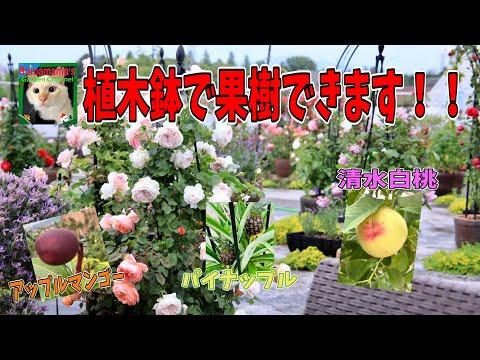 , title : '【フルーツオアシス】お家の植木鉢で美味しい果物できちゃいます!