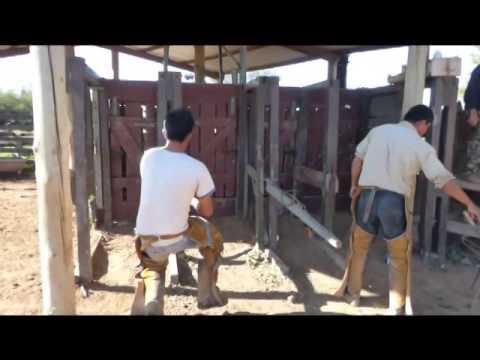0060 Paraguay, Rinder Brandzeichen