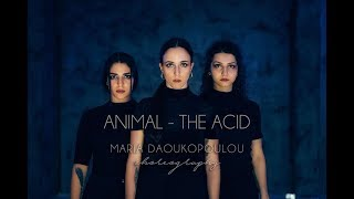 Animal - The Acid | Maria Daoukopoulou Choreography