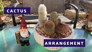 Cactus Dish Arrangement (Mini Cactus Garden)