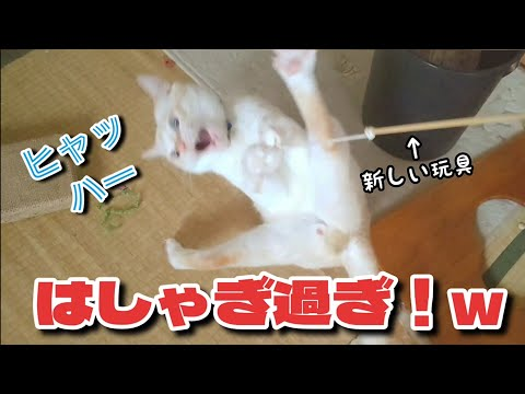 youtube-動物記事2021/09/04 04:55:41