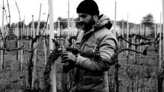 natural wines spontaneus: <br> cantina marco merli
