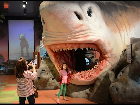 Video Florida Travel: Explore the Museum of Discovery and Science