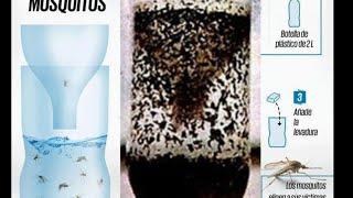 how to make a home made mosquito trap