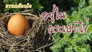อยู่ในกระเปาะไข่